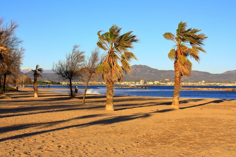 Palmiers dans le vent