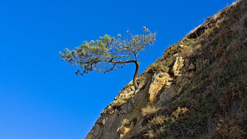 L'arbre accroché à la falaise