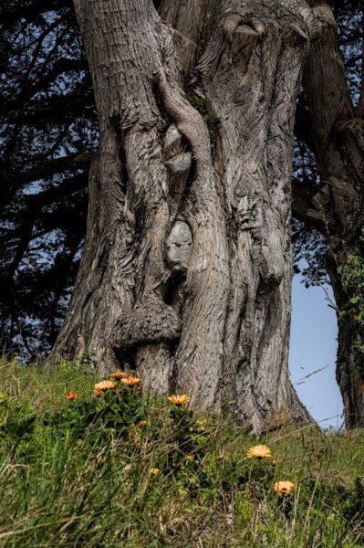 Me voyez vous au milieu de ce tronc ?
